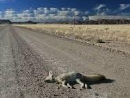 Western Roadkill Observation System