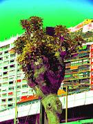 ARBOL MAYO. Publicado 6th May 2012 por GERMAN (arbol mayo)