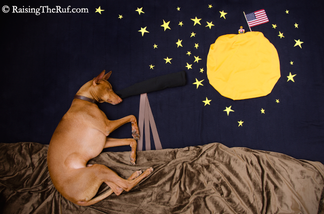 Rufus the dog as an astronomer