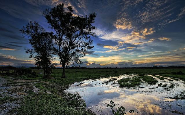 Gambar sunset dan lopak air besar di dalam sawah