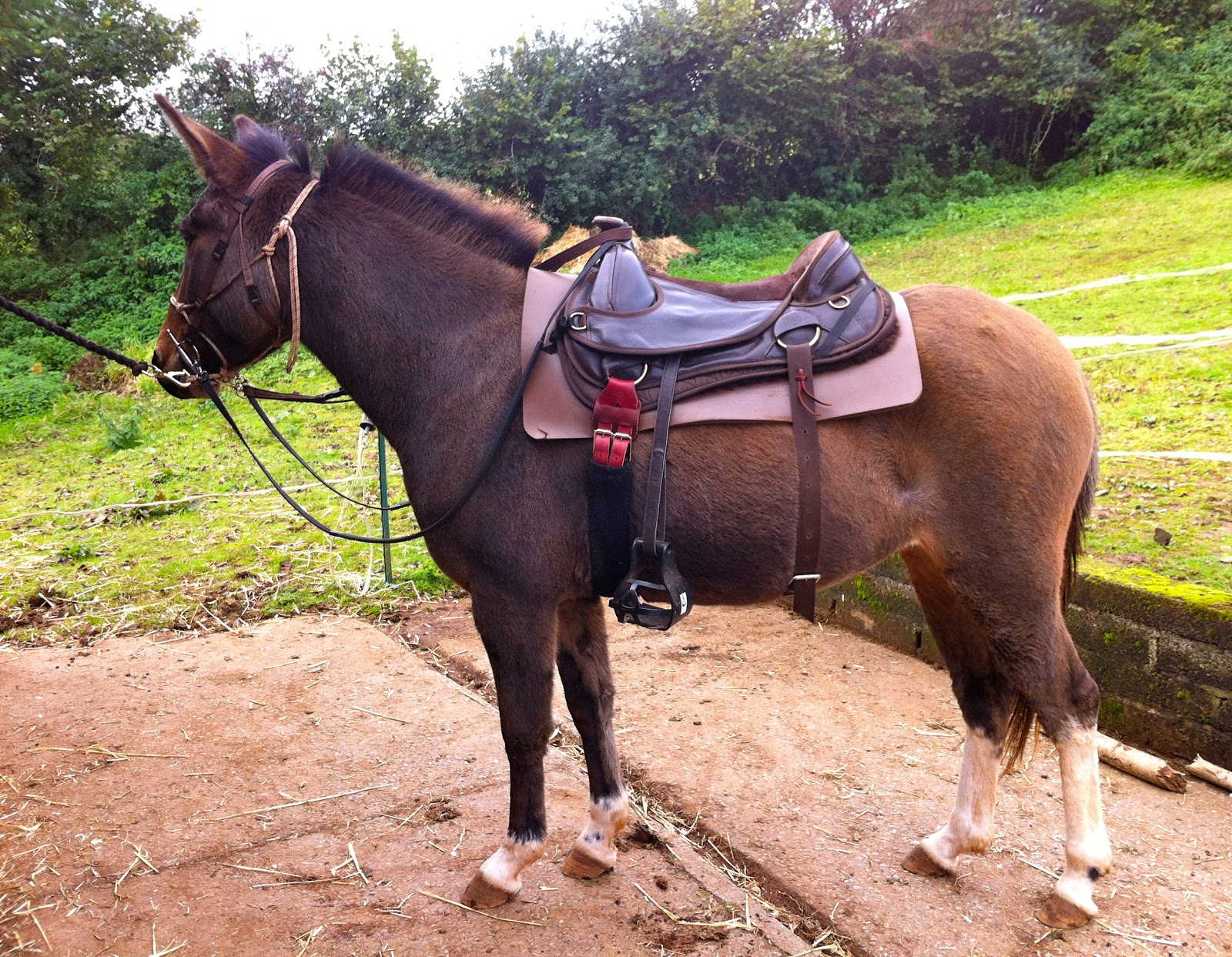 good overview of mules and saddles is found here: http://www ...