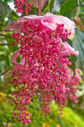 Hinh anh dep hoa hong ngoc anh dep thien nhien anh dep cac loai hoa ve dep cac loai hoa