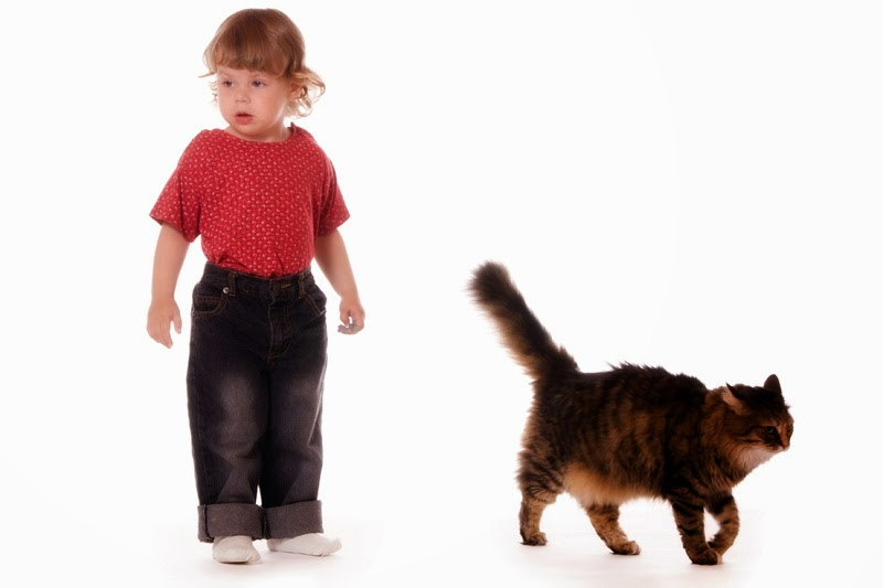 A cat walking away from a small child