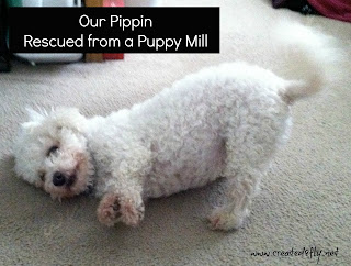 www.created2fly.net: Our pets 2 favorite essential oils - Pippin, our puppy mill momma rescue. I would have used Liquid Xanax for her anxiety and Frankincense for the breast tumors.