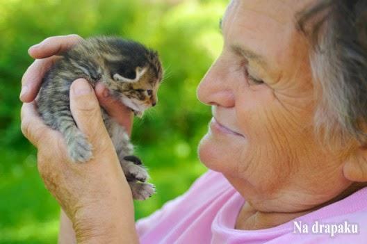 Koty są dla starych ludzi