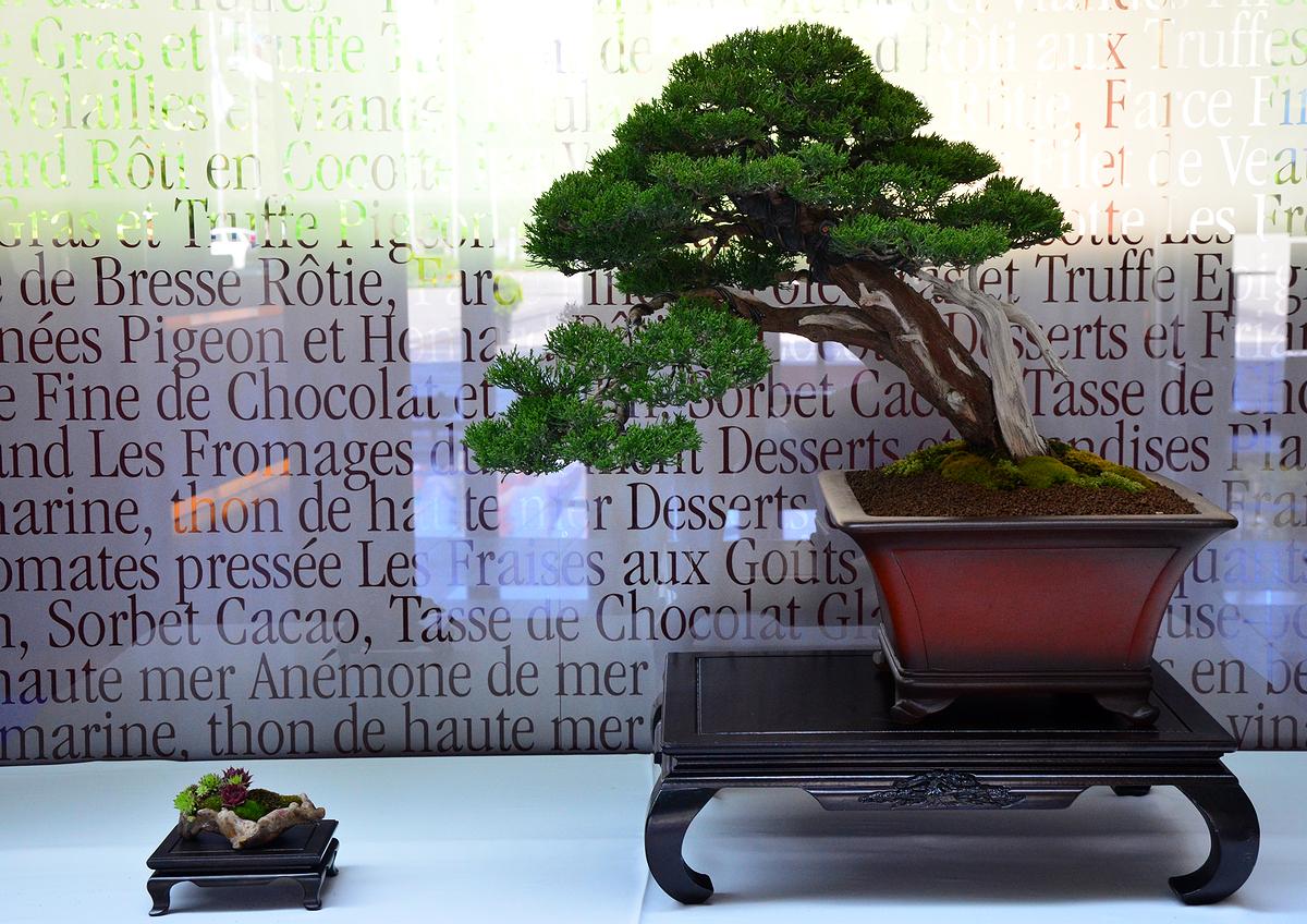 Bonsai Living Art May 2012