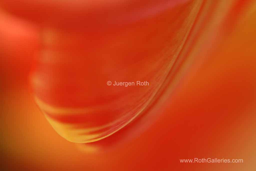 http://juergen-roth.artistwebsites.com/art/all/all/all/silent+muse