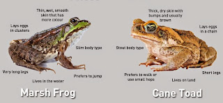 Frogs/Toads