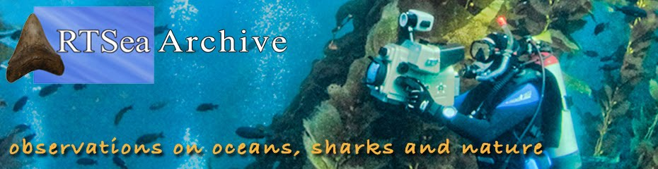 RTSea Archive: observations on oceans, sharks and nature