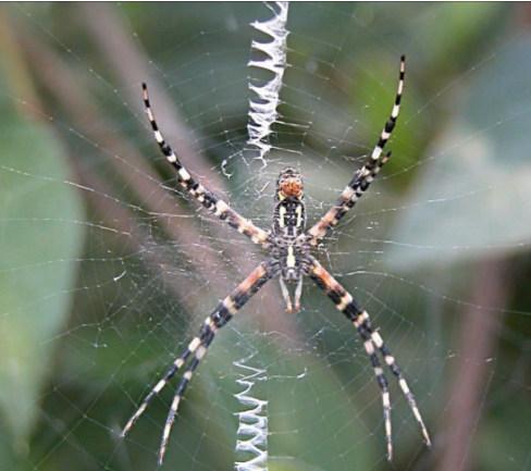 Science weekly for How to get spiders out of your house