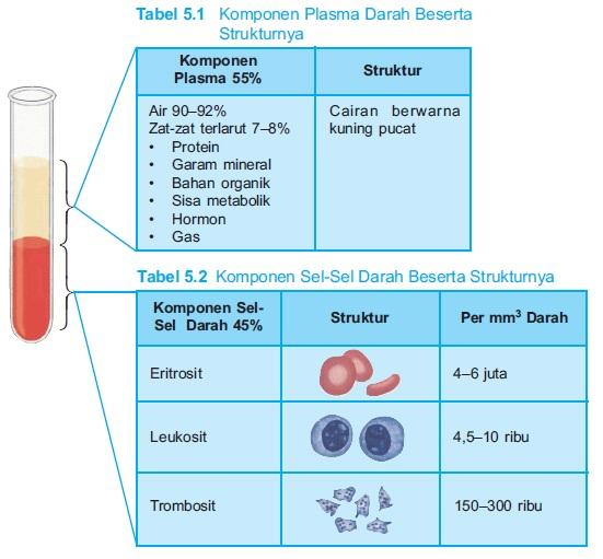 Struktur komponen Plasma Darah