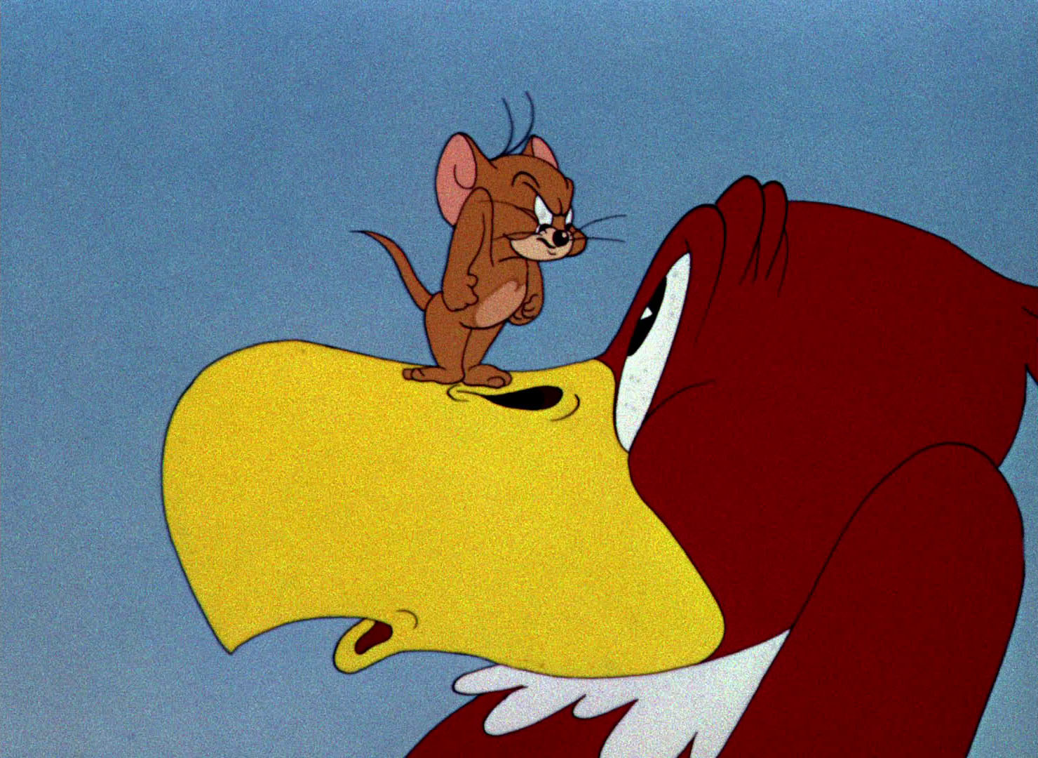 tom e jerry flirty birdy Tom e jerry - un condor innamorato (flirty birdy, 1945) tom e jerry - il gatto da un here are all of the videos that tom & jerry ita has uploaded to vimeo.