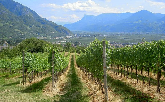 Alto Adige vineyards