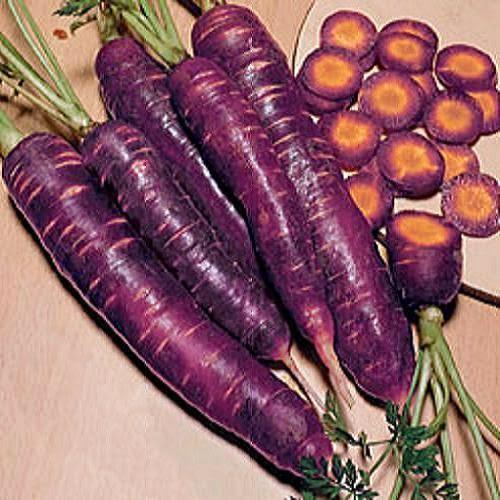 Cà rốt tím Purple dragon