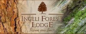 Ingeli Forest Lodge supports the Annual Cape Parrot Count