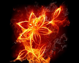 Wallpaper Keren Bunga Api