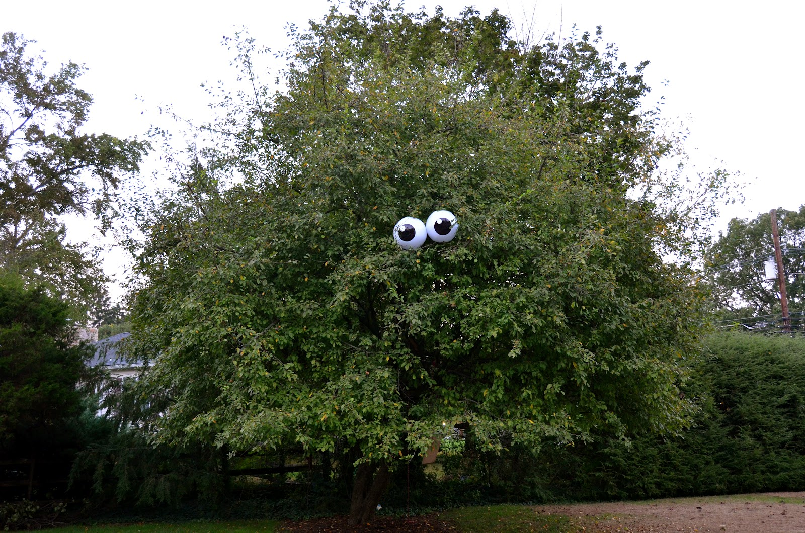 The Princess and The Frog BlogEyeballs in a Tree!