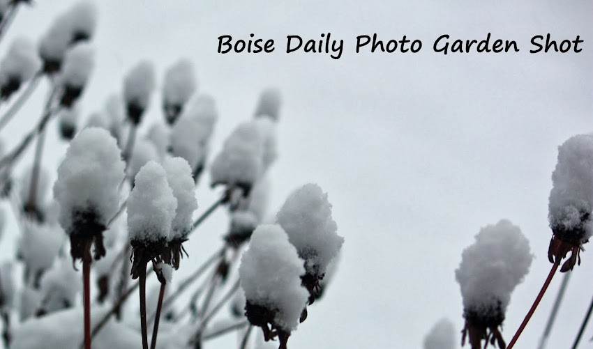Boise Daily Photo Garden Shot