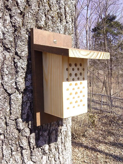 Our Mason Bee House $28 Free Shipping!