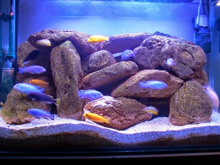 Mundo acuario la decoraci n del acuario - Decoracion acuario marino ...