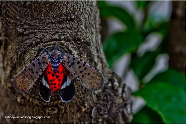 Hình ảnh những chú bướm xinh đẹp