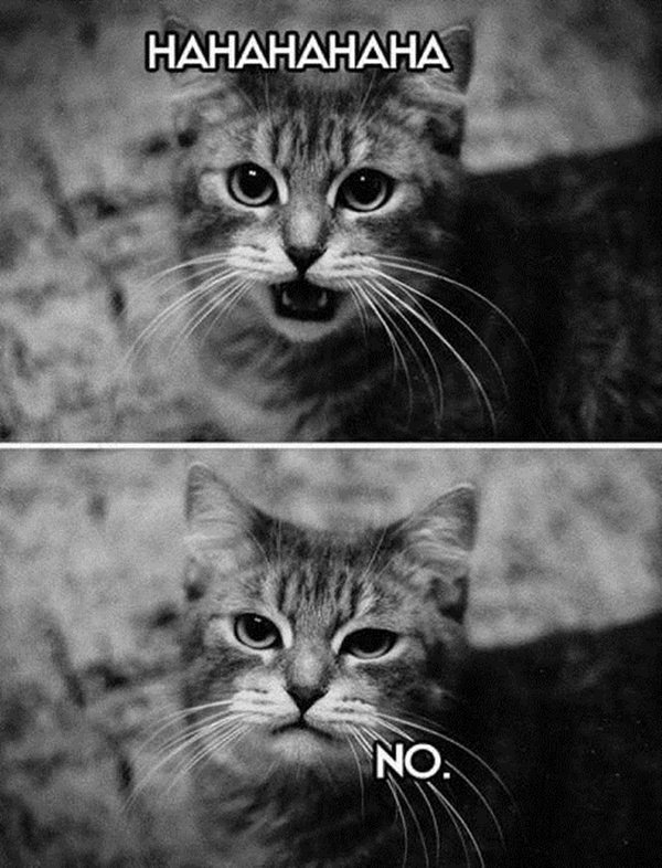 animal pictures with captions, lolcats, cat expressions