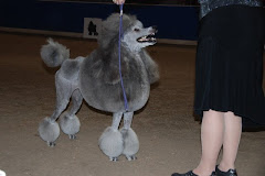 Poodle Specialty Club of B.C.