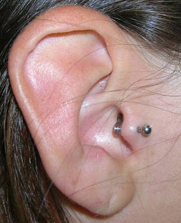 how to put a nose ring in your tragus