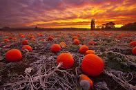 Δὸς ἡμῖν σήμερον... Πορτοκάλια