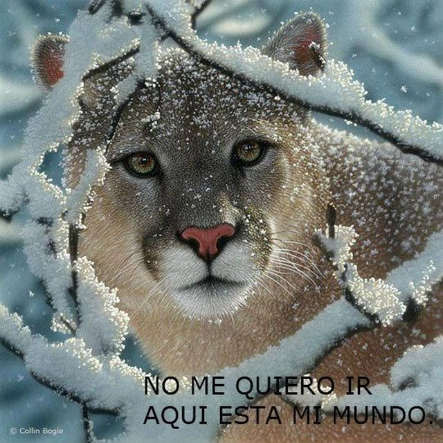 CACHORROS Y ANIMALES Pumas+amenazados