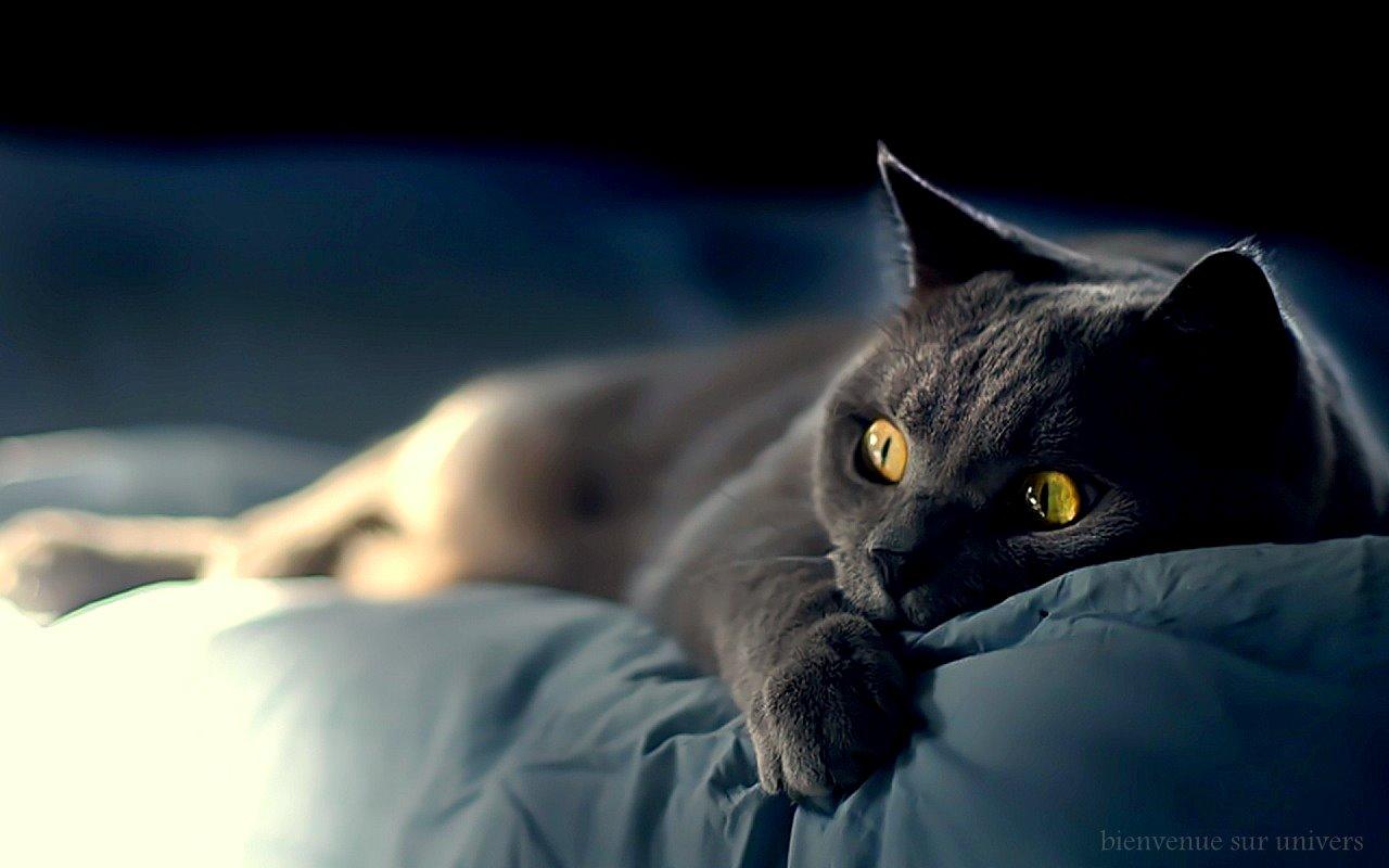 chat bienvenue gratuit Caluire-et-Cuire