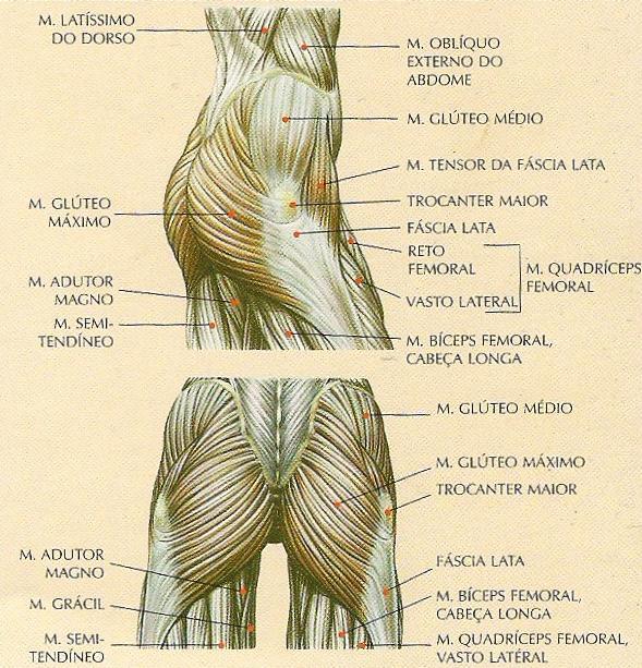 musculos12.jpg