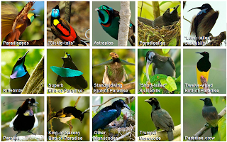Cornell Lab of Ornithology, Birds of Paradise Project