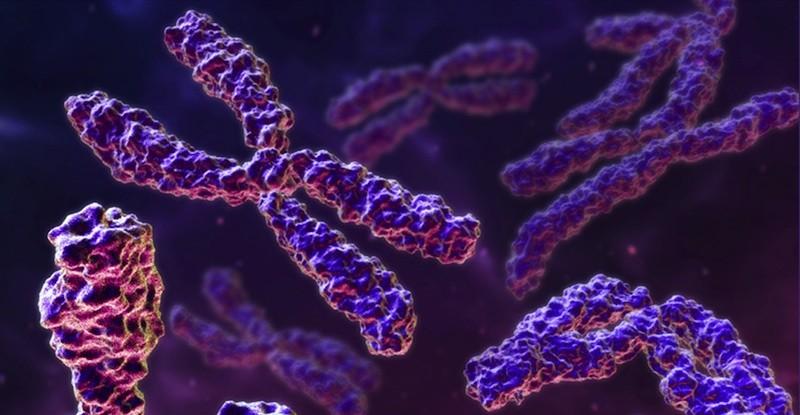Alteraciones Cromosomicas Alteraciones Cromosómicas