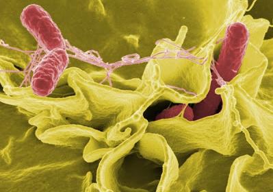 Bakteri Air Yang Sering Kita Minum