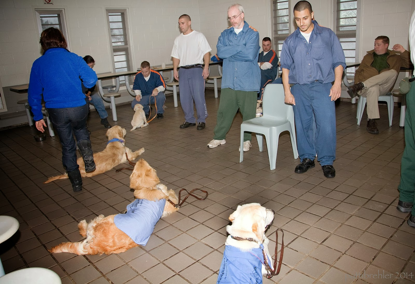 Three large puppies lie on a light colored tile floor while a woman dressed in a blue fleece jacket and blue jeans steps over them. She is on the left side facing away from the camera. Three inmate raisers stand opposite the dogs, facing the camera. There are several other men sitting in the background.
