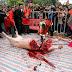 Perayaan Potong Babi Hidup-Hidup Di Vietnam