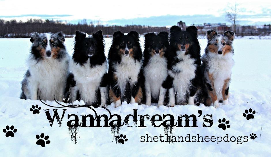 Wannadream's Sheltit