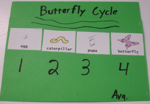 Learning Ideas - Grades K-8: Butterfly Life Cycle Activities