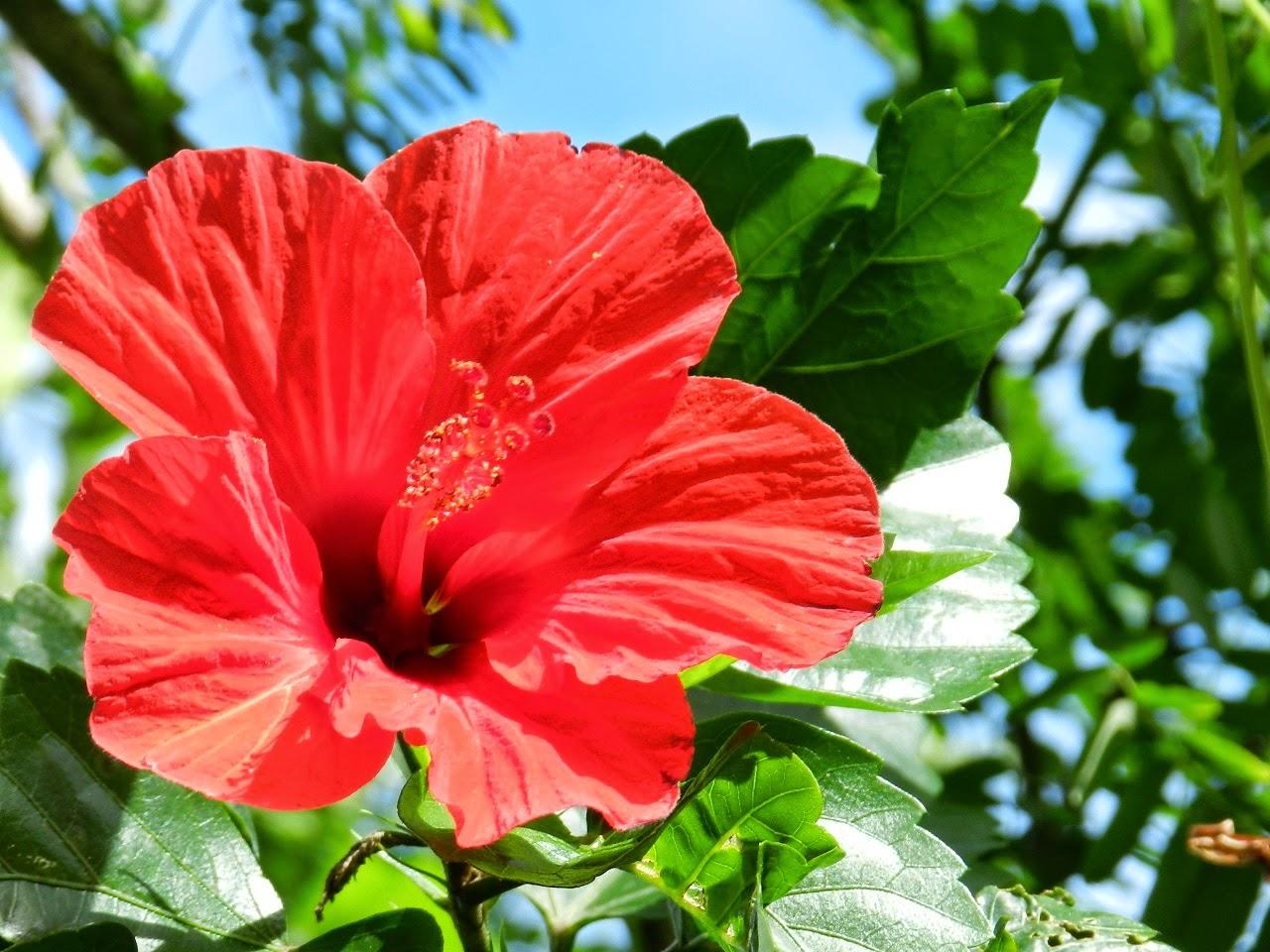 Fleur (C) AAVedarozaga