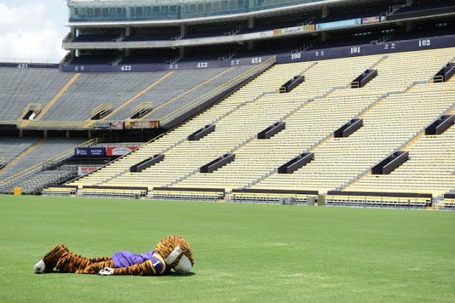 LSU's Mike the Tiger planking? LSU's Mike the Tiger planking.