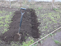 Allotment Jobs - November - Digging A Bean Trench