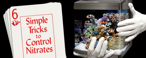 6 simple tricks to control nitrates in a reef tank marine depot blog