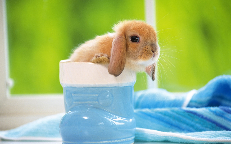 rabbit cute