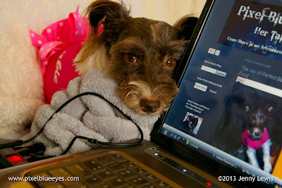 Image of Pixel sitting beside laptop helping Mommy work on new blog design