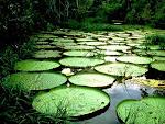 Brasil - Amazonas