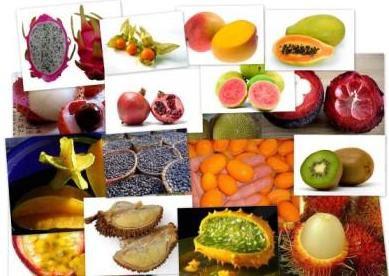 Frutas frutas exoticas del ecuador - Frutas tropicales y exoticas ...