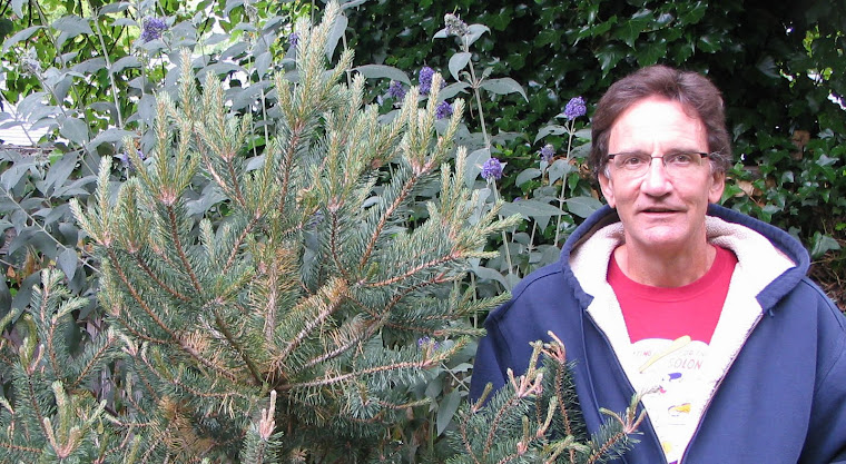 Me and My Tree - Day One