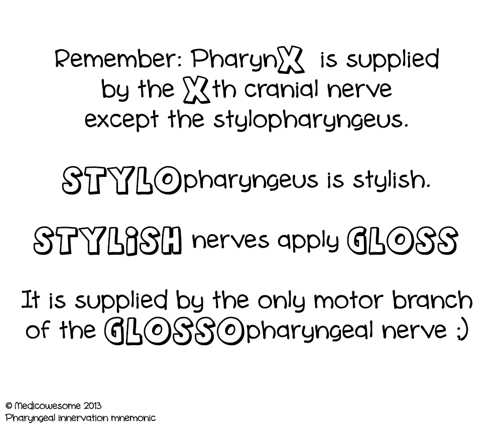 Medicowesome: Innervation of the tongue, palate, pharynx & larynx ...