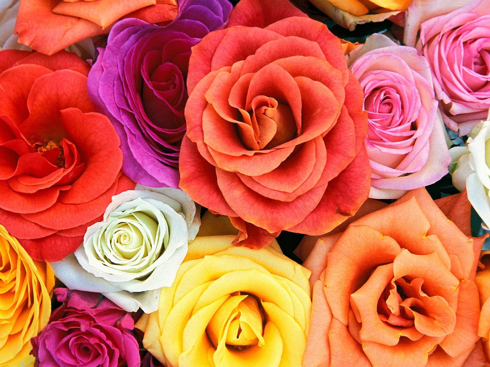 http://4.bp.blogspot.com/-d80cIoxloP0/UGaAtL3xBYI/AAAAAAAAAIY/6LfR1KTiTWA/s1600/wallpaper-gambar-bunga-7+-+Copy.jpg